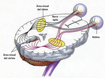 recorregut nervi